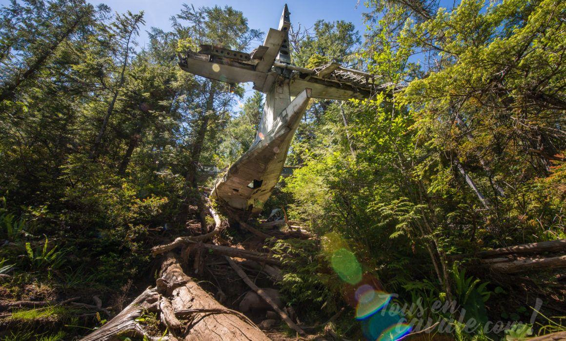 Une épave d'avion en pleine forêt