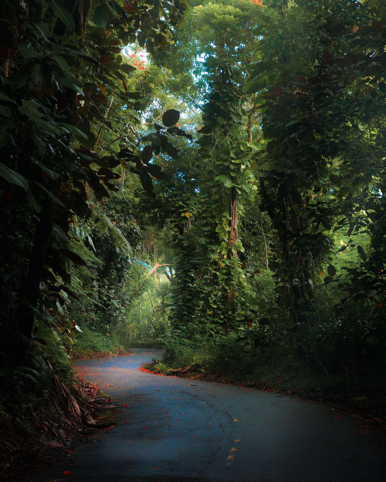 Au détour d'un chemin sur Big Island